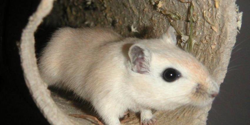 Nederland wil voorop lopen met dierproefvrij onderzoek