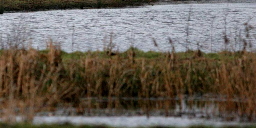 Dronevlieger vrijgesproken van opzettelijk veroorzaken dierenonrust Oostvaardersplassen