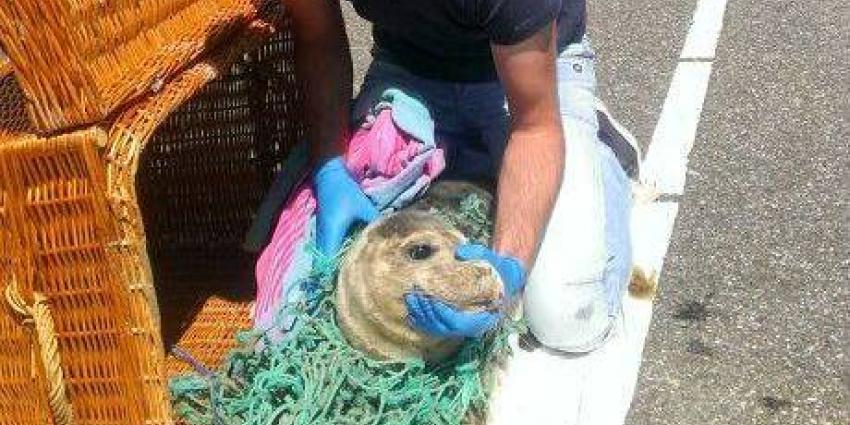 Zeehondencrèche en Groningen Seaports gaan samen visnetten recyclen