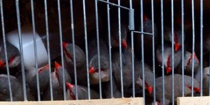 NVWA neemt ruim 1.000 vogels in beslag