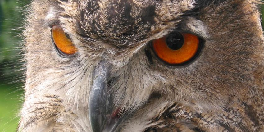 'Medewerkers vogelopvang terror-oehoe bedreigd'