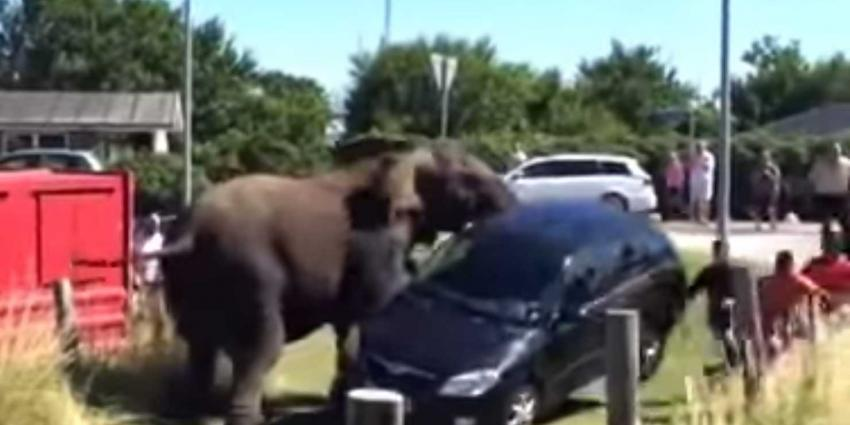 Je moet een olifant nooit boos maken, kijk hier waarom