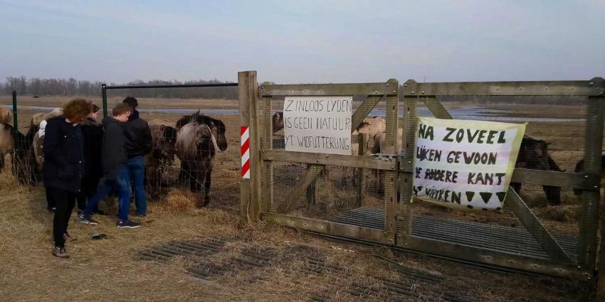 'Dieren Oostvaardersplassen eerder uit lijden verlossen'