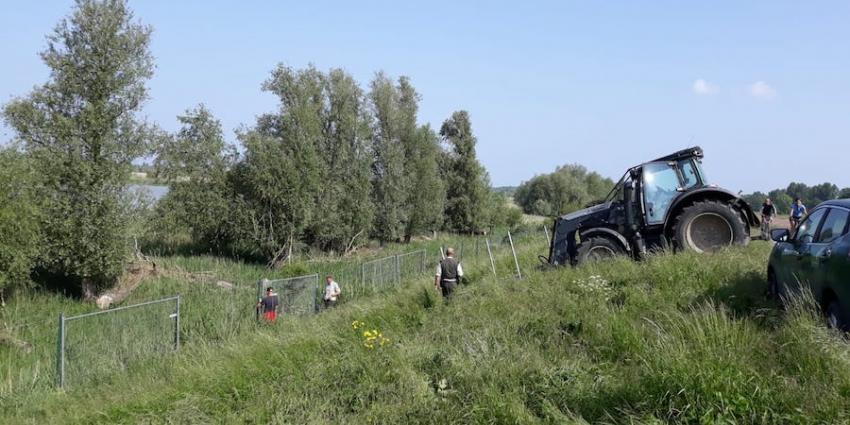 Twee van de drie doodgeschoten herten waren drachtig