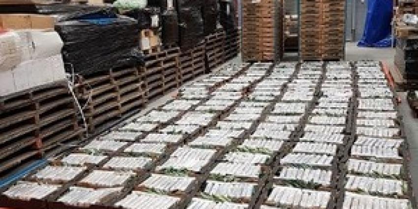 Grote hoeveelheid cocaïne gevonden in loods