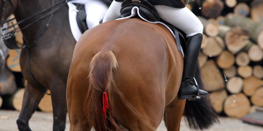 Belgische amazone overleden na val door weigerend paard