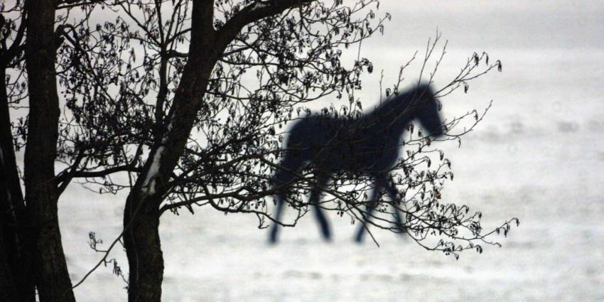 paard-sneeuw-winter