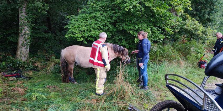 paard-wagen-brandweer