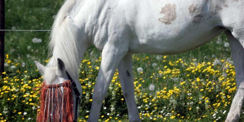 Foto van paard in weiland   Archief EHF
