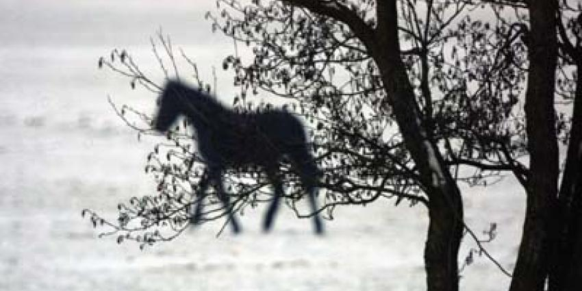 foto van paard | fbf archief