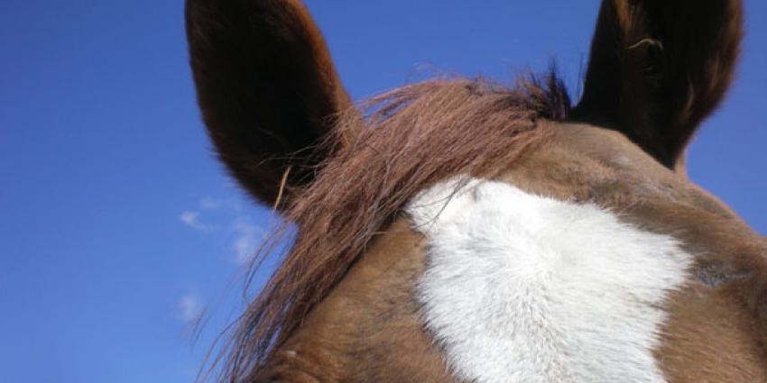 Paard mishandeld in weiland