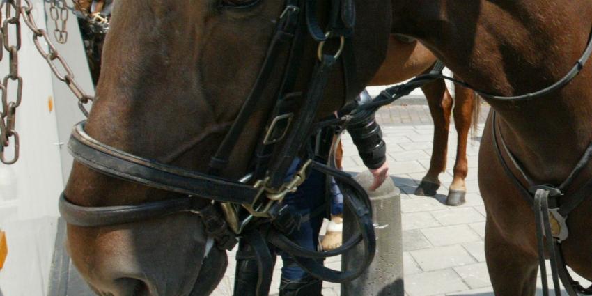 Geschrokken paard loopt drukke kledingwinkel Mijdrecht binnen