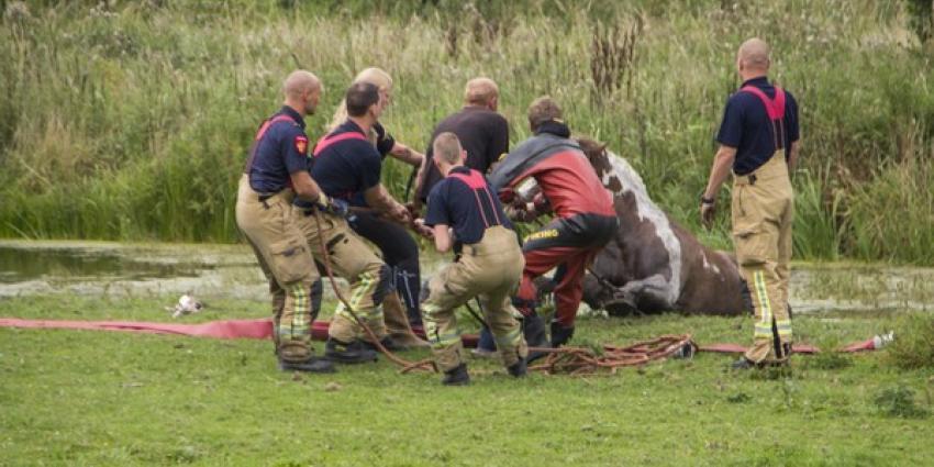 Brandweer haalt paard uit sloot