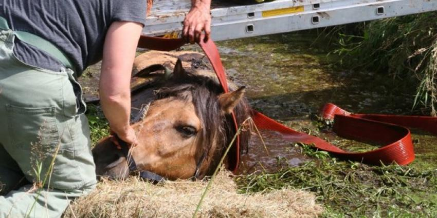 Paard gered uit diepe sloot