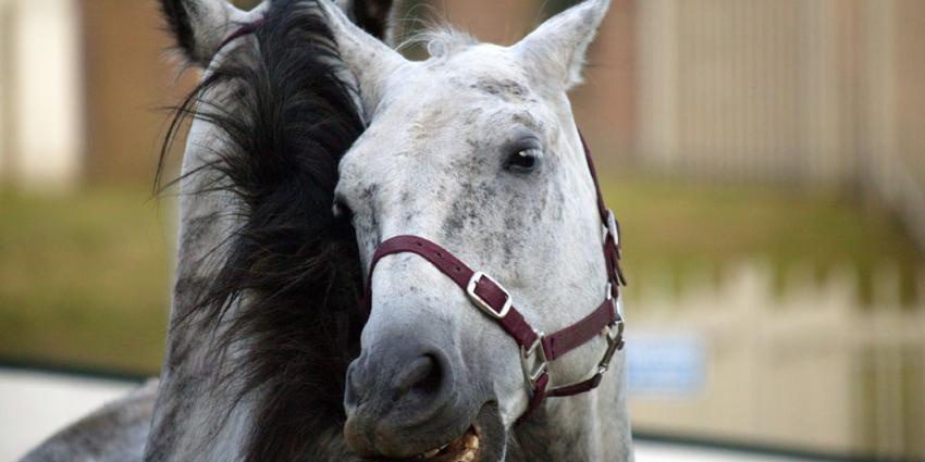 Twee merries mishandeld in stal