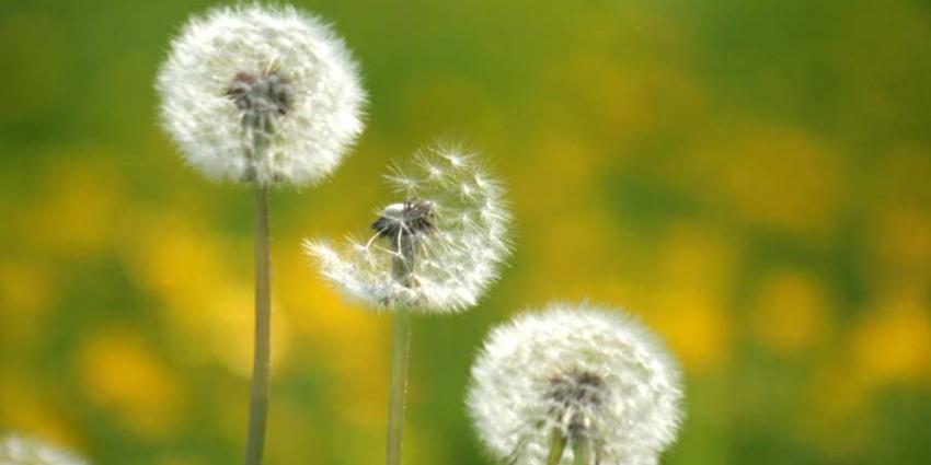 Moleculair 'samoeraizwaard' controleert plantengroei