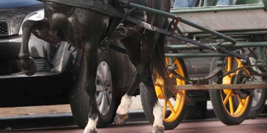 Paarden slaan op hol door inhalende vrachtwagen, vrouwen gewond