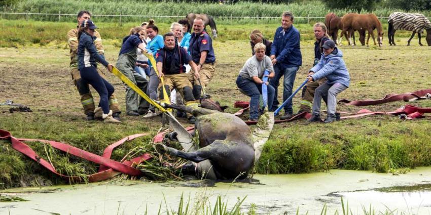 Paard uit de sloot gehaald door brandweer en manegepersoneel
