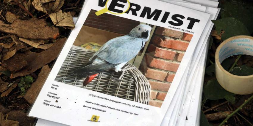 papagaai-vermist
