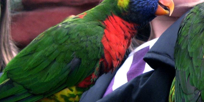 Kinderen lopen papegaaienziekte op na aankoop papegaai
