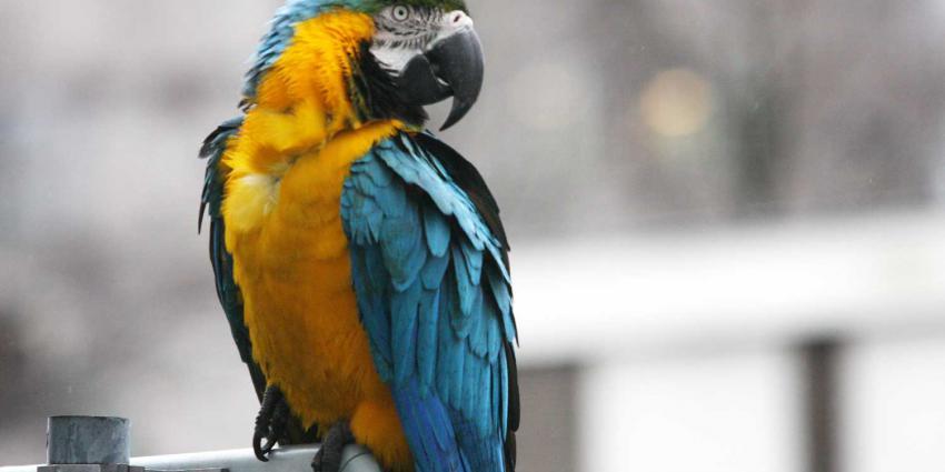 Man ramt lantaarnpaal en laat auto met papegaai achter