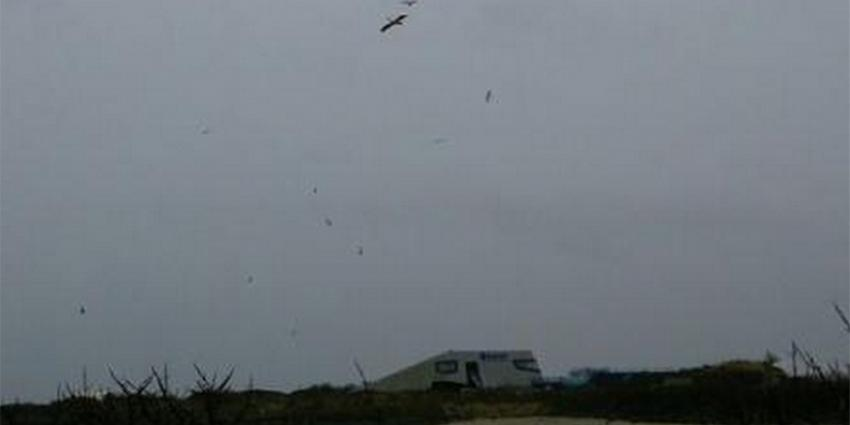 Foto van 2 vliegende roze pelikanen | Ted Sluijter/Natuurmonumenten
