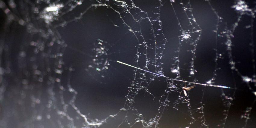 Hooikoortsweer is ook balen voor spinnen