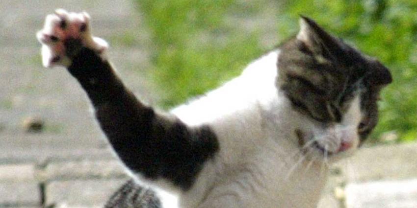 Acht katten in het 'niets' verdwenen in wijk Leeuwarden