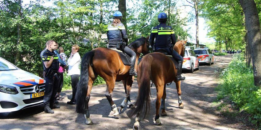 politie-paard