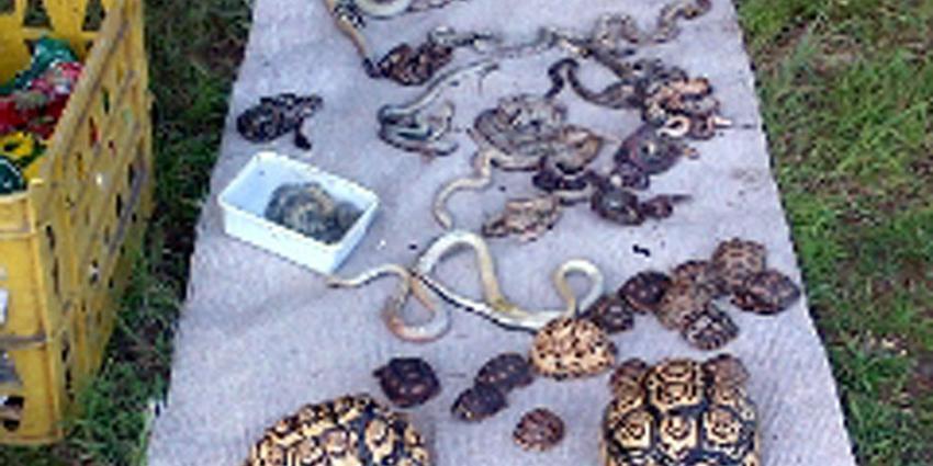 Exotische dieren gedumpt en overleden