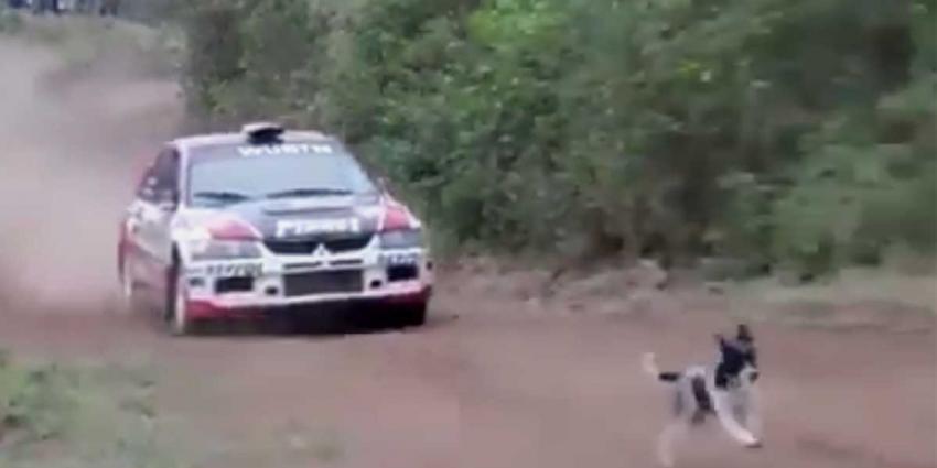 Deze hond heeft echt alle geluk van de wereld