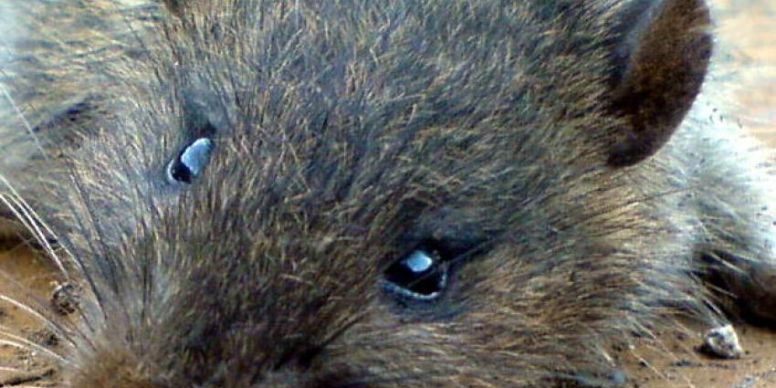 Dierenpolitie neemt verwaarloosde dieren in bewaring