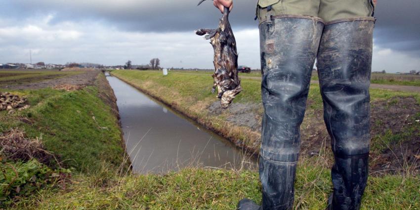 Vangsten Muskusratten gedaald, meer instroom van Beverratten