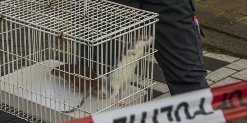 Foto van ratten in kooi bij brand   Flashphoto   www.flashphoto.nl