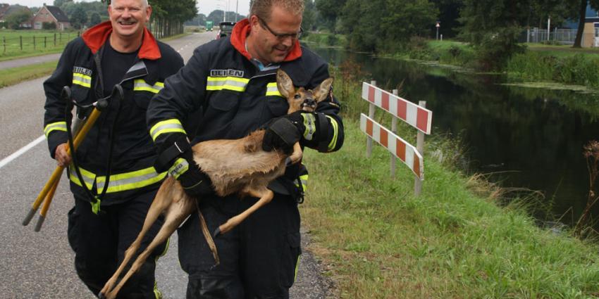 Foto van reebokje gered door brandweer | Henk Brunink