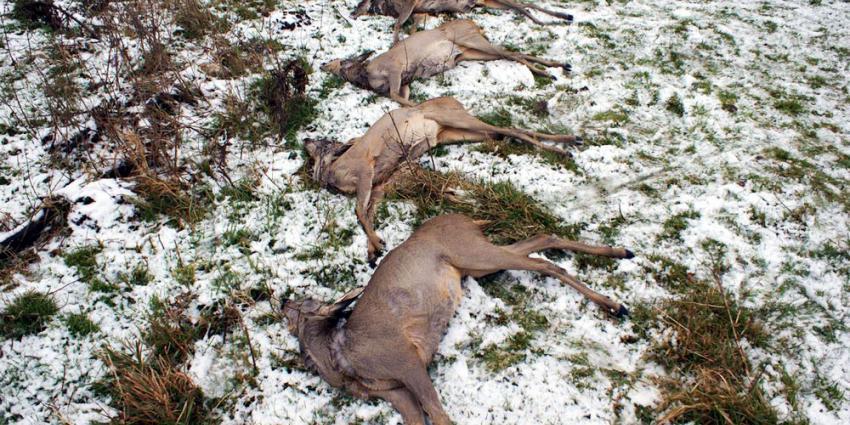 foto van dode ree | fbf archief