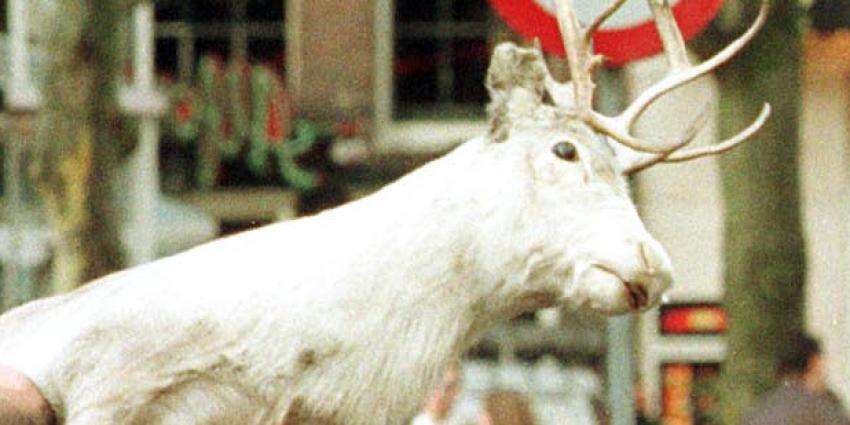 Britse buurt opgeschrikt door rendier in aanloop naar Kerst