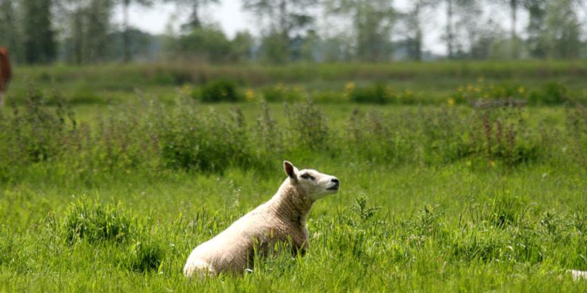 foto van verwaarlozing dier | fbf archief