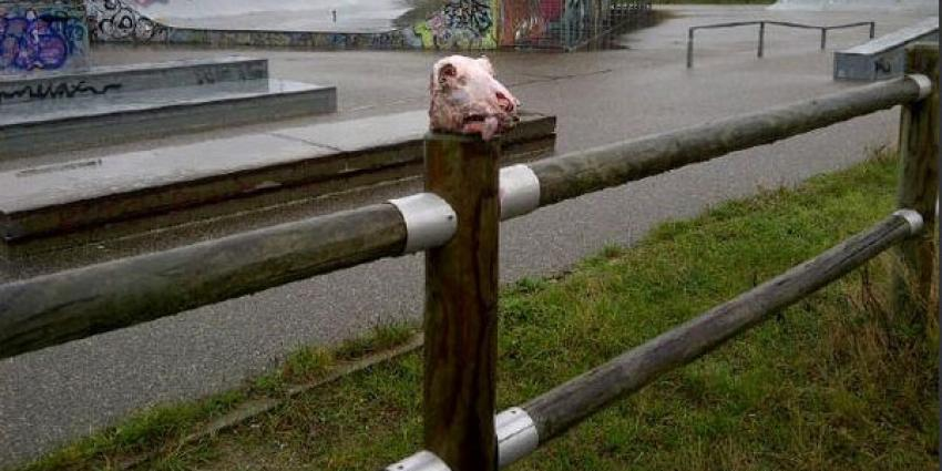 Schapenkop bij skatepark Katwijk achtergelaten