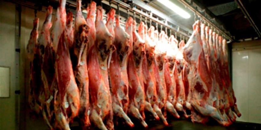 Waarschuwing voor ossenstaarten van Belgisch vleesbedrijf