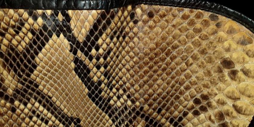 slangenleer-kleding