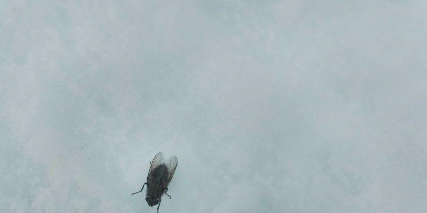 sneeuw-vlieg-winter