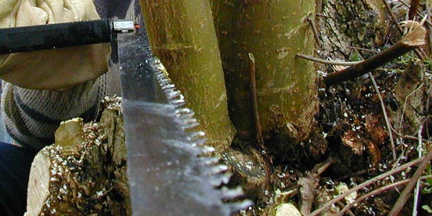 Foto van zagen snoeien boom | Archief EHF