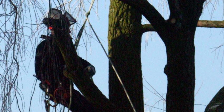 Man overleden bij snoeiwerkzaamheden in Vlaardingen