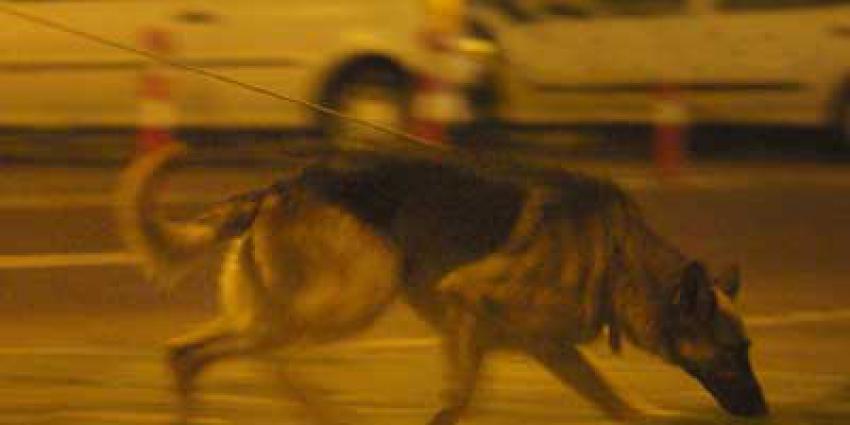 geurhond-speurhond-BON2020