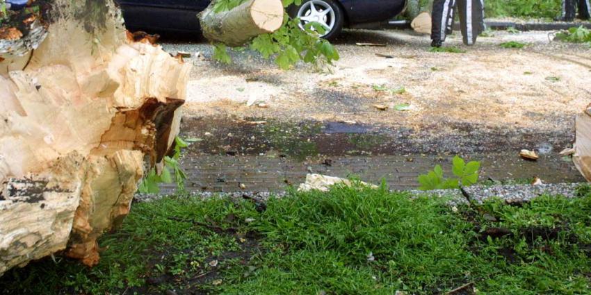 Windhoos richt spoor van schade aan in Noord-Hollandse Winkel