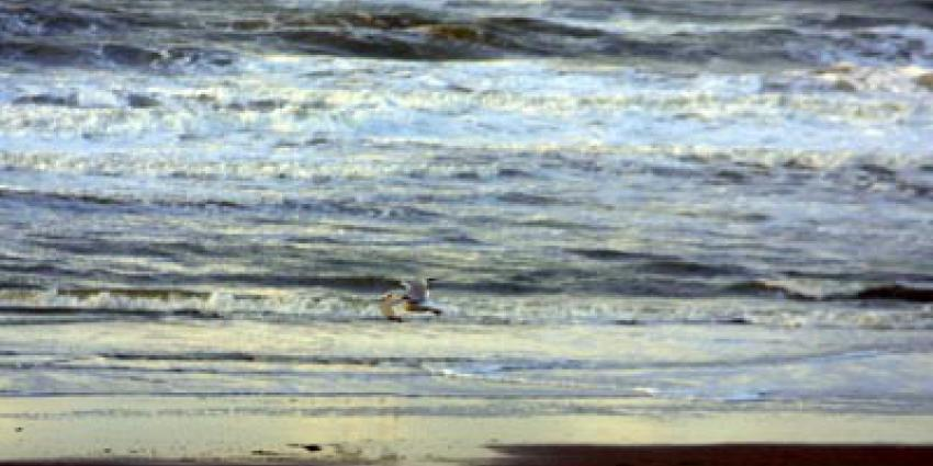 Lekkende olie uit wrak Westerschelde vervuild stranden Vlissingen