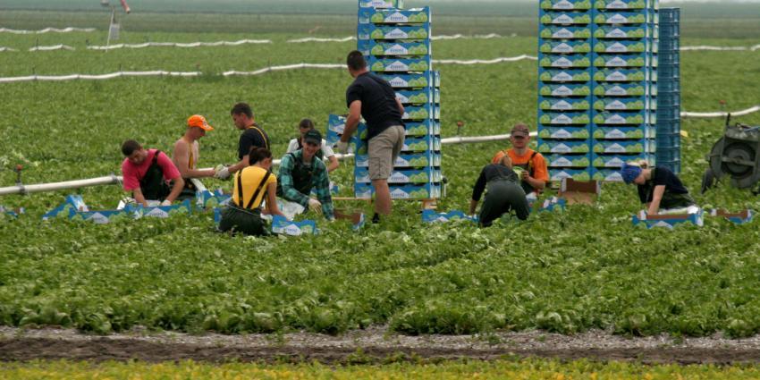Tuinbouwakkoord stuurt richting een circulaire tuinbouwsector