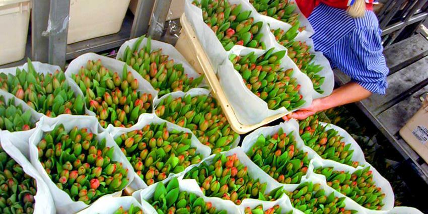 25 kilo drugs tussen bloemen op veiling