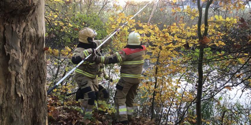 brandweer, bevrijden, vastzittende eend, boom